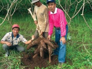 Hasil Panen. Photo: Kementrian Pertanian