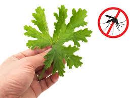 Tips Cara Mudah untuk Mengusir Nyamuk