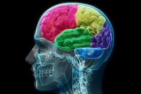 Secara Medis, Otak Lebih Sehat Ketika Kita Berkata Jujur