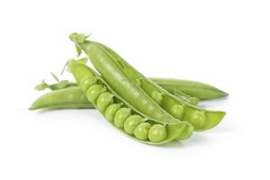 Kandungan Gizi dan Komposisi dari Kacang Polong atau Ercis (kacang ercis)