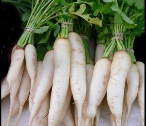 Kandungan Gizi dan Komposisi dari Lobak Rebus tanpa Garam
